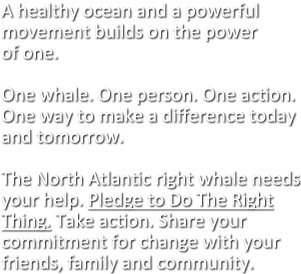 A healthy ocean and a powerful movement builds on the power of one.  One whale. One person. One action. One way to make a difference today and tomorrow.  The North Atlantic right whale needs your help. Pledge to Do The Right Thing. Take action. Share your commitment for change with your friends, family and community.