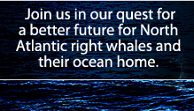 Join us in our quest for a better future for North Atlantic right whale and their ocean home